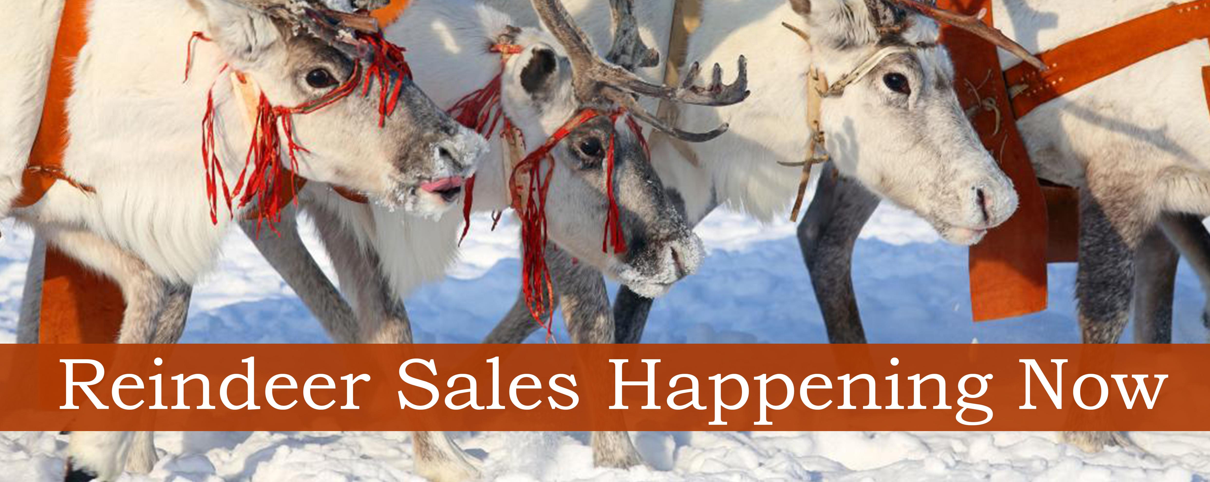 facebook-banner-reindeer-sales-4