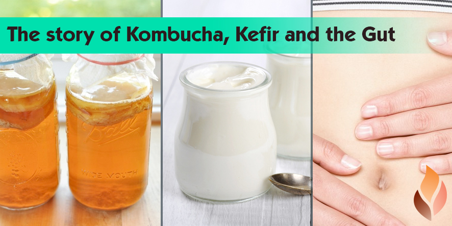 The story of Kombucha, Kefir and the Gut!